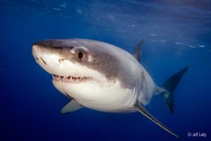 20110906_sharks_0385-2