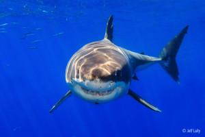 20110906_sharks_0823a