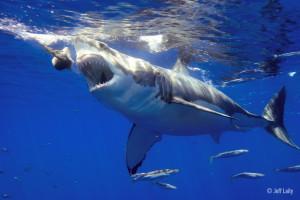 20110906_sharks_1094-2